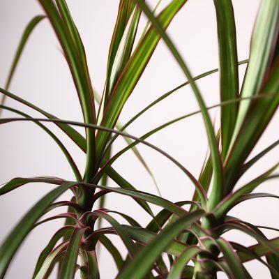 palm closeup