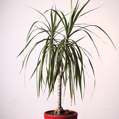 palm studio