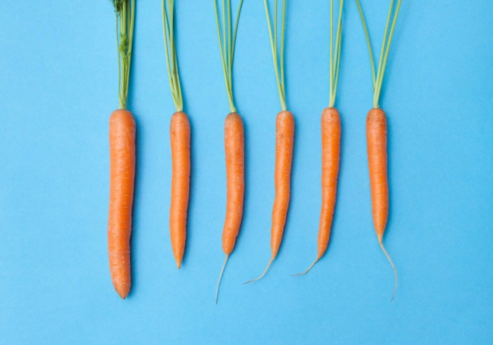 carrots on blue backgrond-1